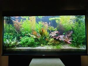 Biodesign Риф 125 или Juwel Rio 125