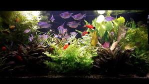 Ленивый травник в высоком аквариуме