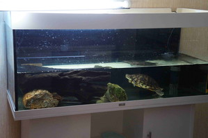 биобаланс в акватеррариуме