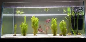 Мини-пруд для золотых рыбок