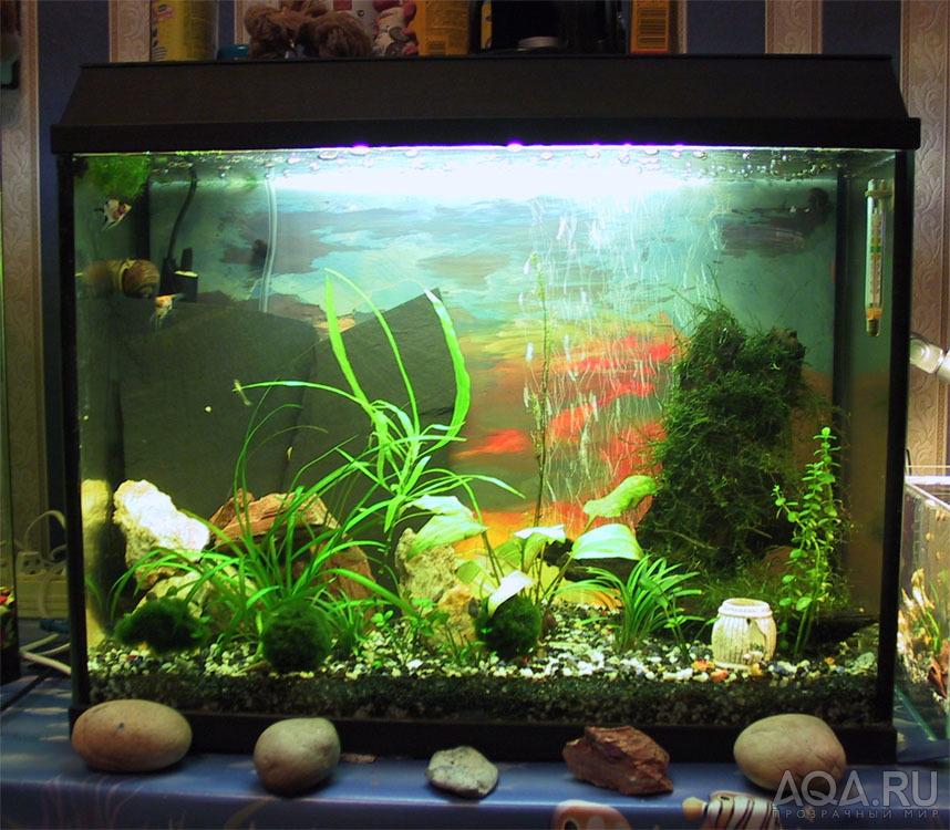 аквариумные хозяйства фото воды